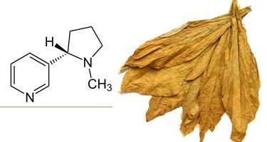 nikotin-a.jpg